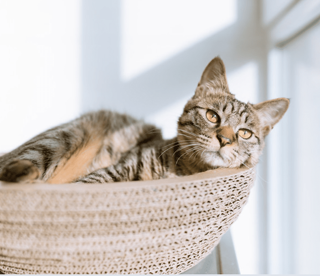 cat in basket wix stock.png