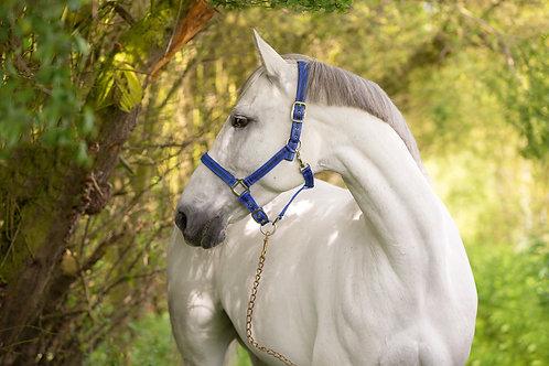 Cabezada mod Mustang, azul