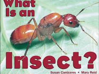 What Is An Insect? (Emergent Readers)