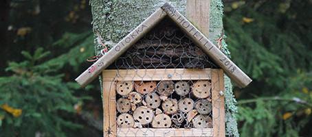 Protège la biodiversité à la maison 🌍
