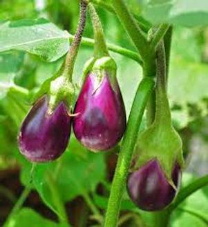Native Talong/ Bonito Eggplant Per Kilo