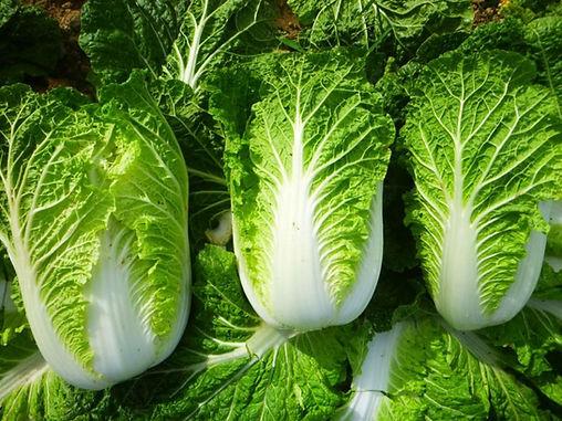 Pechay / Chinese Cabbage PER KILO