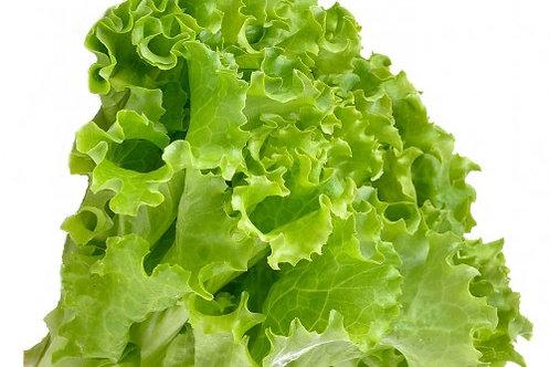 Green Ice Lettuce Per Kilo