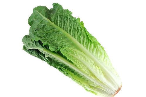 Romaine Lettuce Per Kilo
