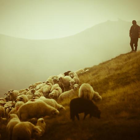A Kingly Shepherd - Psalm 23:1