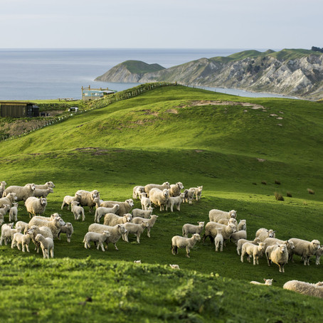 Where Are Those Green Pastures? - Psalm 23:2a