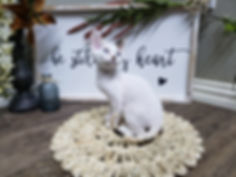 Point Blur_Jun212020_173224.jpg
