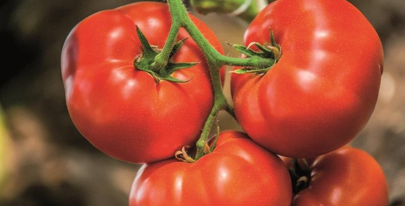 Tomates Big Beef Hybrid (grosses)