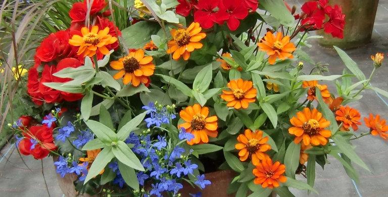 Gros pot de fleurs surprises