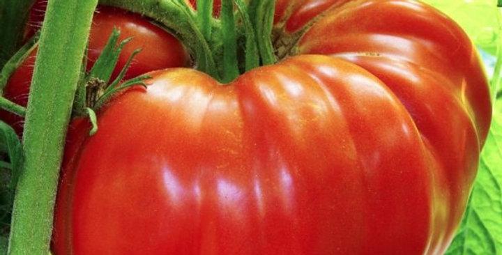 Tomates Bush Beefsteak (grosses)