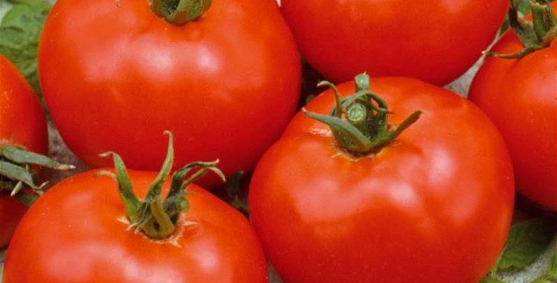 Tomates Moneymaker