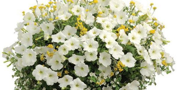 Panier suspendu mélange de Pétunia blanches et de Marigold jaunes