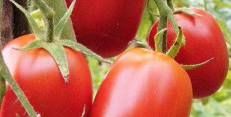 Tomates Roma-italiennes (moyennes)