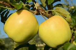 Azienda Agricola Golden Pause2