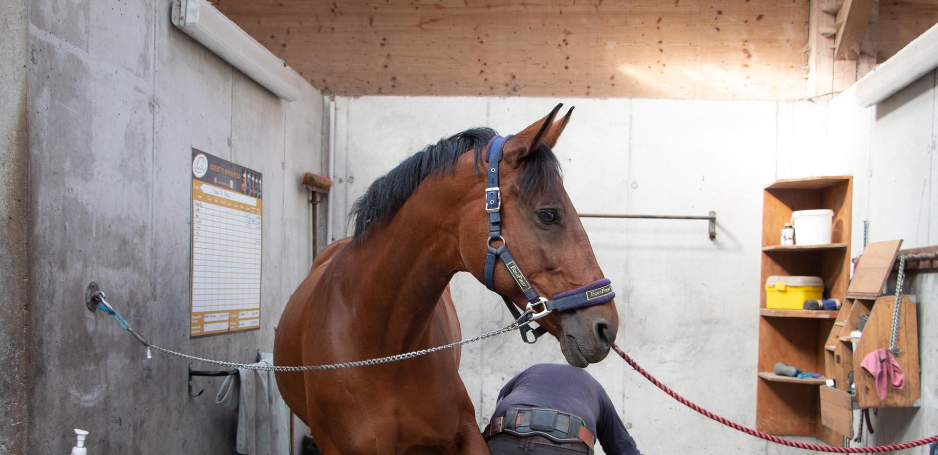 Aire de pansage pour les chevaux