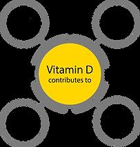 SynBio Premium - Vitamin D3 1000 IU - Cl