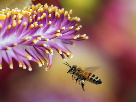 Un zoom sur… les produits de la ruche !