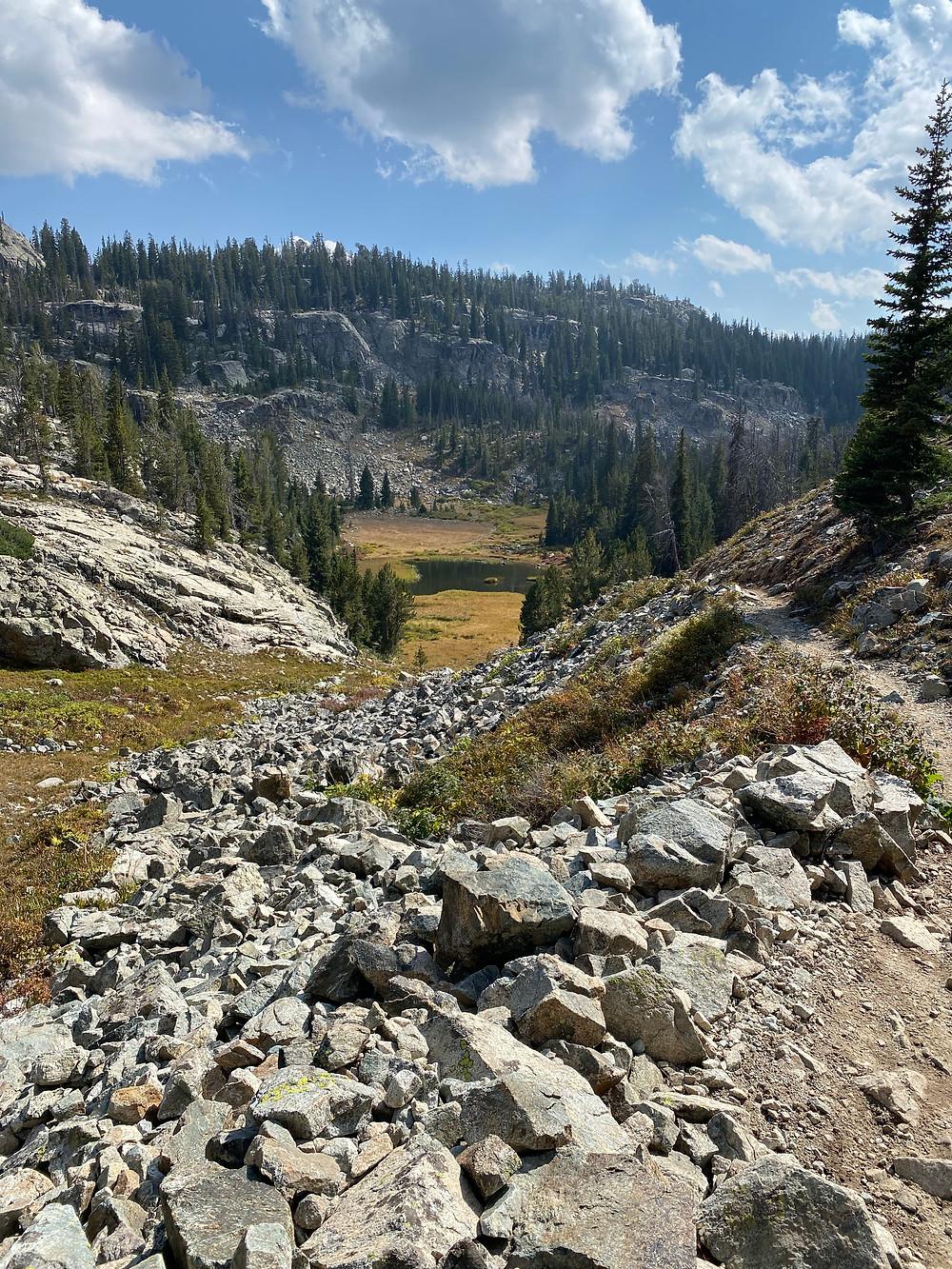 Evergreen-covered hillsides in Bridger-Teton National Forest in Wyoming