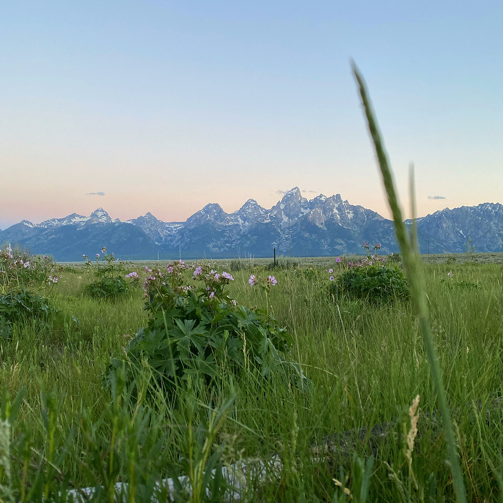 sunset tints the sky over a lush meadow filled with green grass and multi colored wildflowers, with the Grand Tetons looming over the Wyoming horizon
