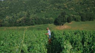 Le Vivant dans les vignes