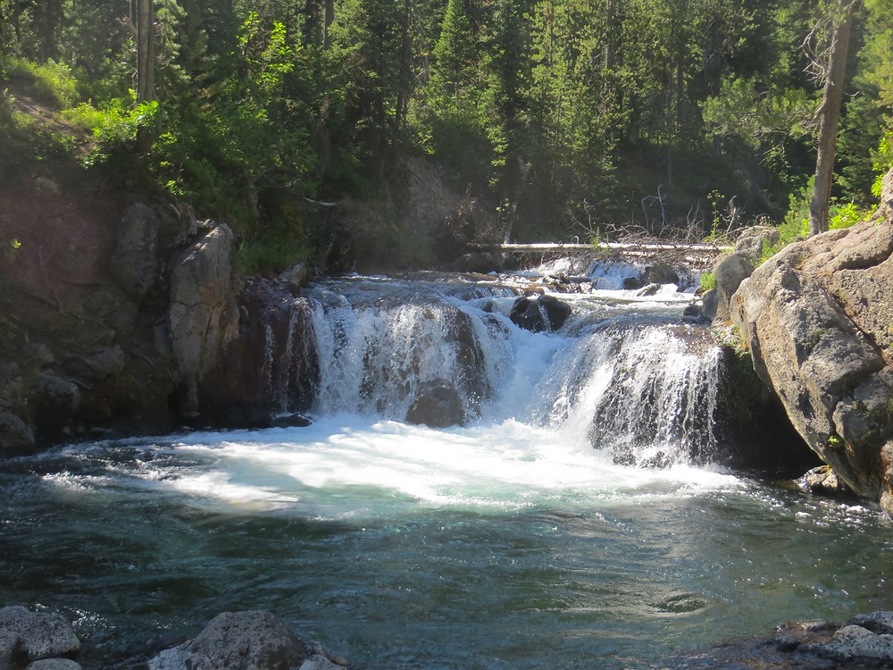 Secluded deep within a lush evergreen forest, a small waterfall pours into Scout's Pool in Yellowstone National Park