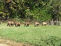 Sheep_Trail.JPG