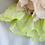 Thumbnail: Riya Neon Collar - Limited Edition