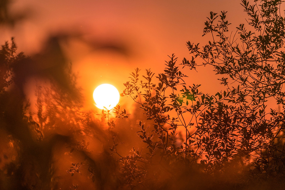 Sun silhouetting leaves against orange sky