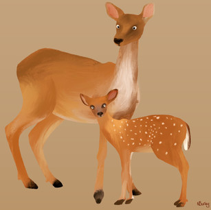 A Doe and Her Fawn