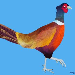 Rainbow Pheasant