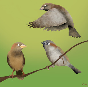 Sparrow Chats