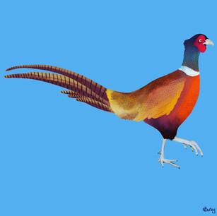 Rainbow Pheasant Full