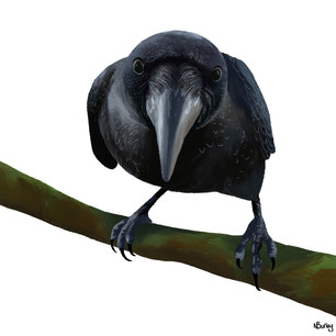 The All-Seeing Crow