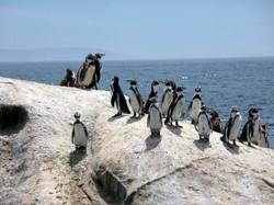 Réserve des pingouins de Humboldt