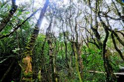 Parc national Fray Jorge