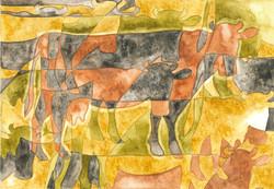 Guernsey Holstein