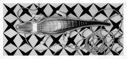 alligatorewebdit.jpg