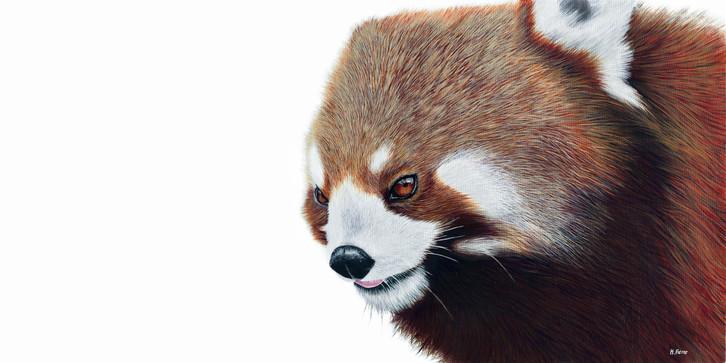 Red Panda:heidi farrar.jpg