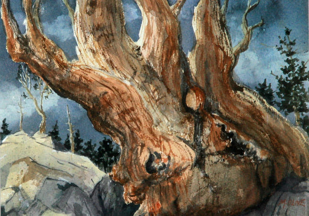 Brisstle Cone Pine.jpg