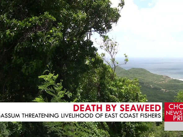 THE EFFECTS SARGASSUM SEAWEED POSES ON COASTAL AREAS ARE EXAMINED.