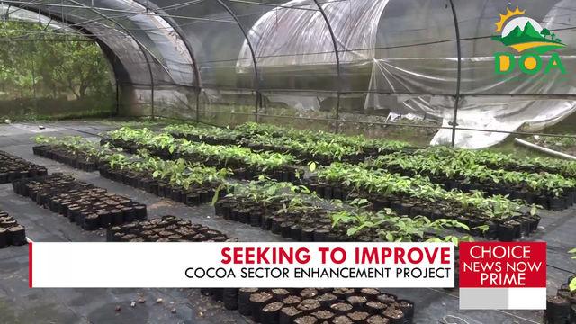 DEVELOPMENTS IN THE COCOA SECTOR UNDERWAY