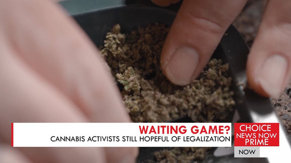 CANNABIS ADVOCATES CONTINUE TO PRESS FOR LEGALIZATION AHEAD OF THE UPCOMING ELECTIONS.