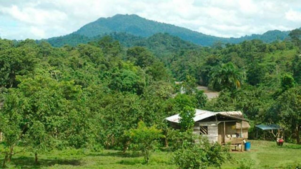 La invasión de colonos puede causar la desaparición de 12 comunidades miskitas - Foto cortesía.