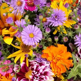 Цветы.png
