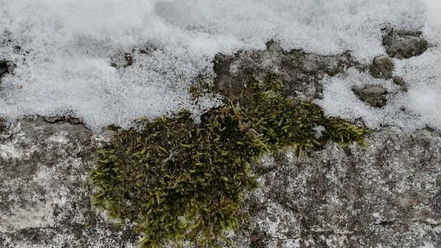Красота природы зимой