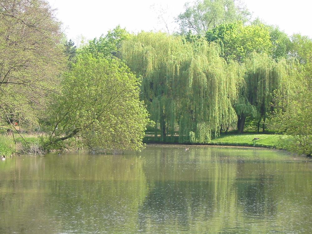 Parc de Raigate à Brunoy