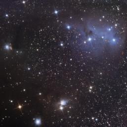 IC446