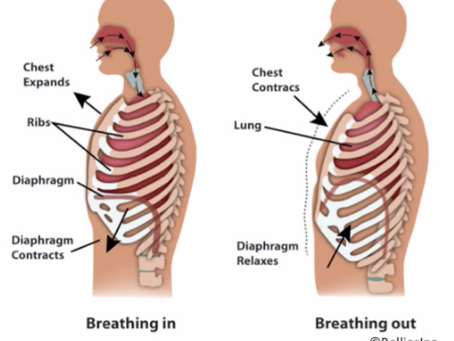 Core Breath - Diaphragm