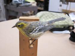 Student Bird Model