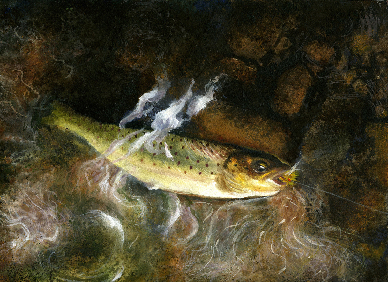 Brook Trout300dpi